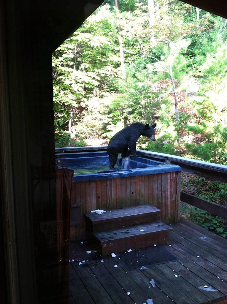 Bear_in_Hot_Tub_2