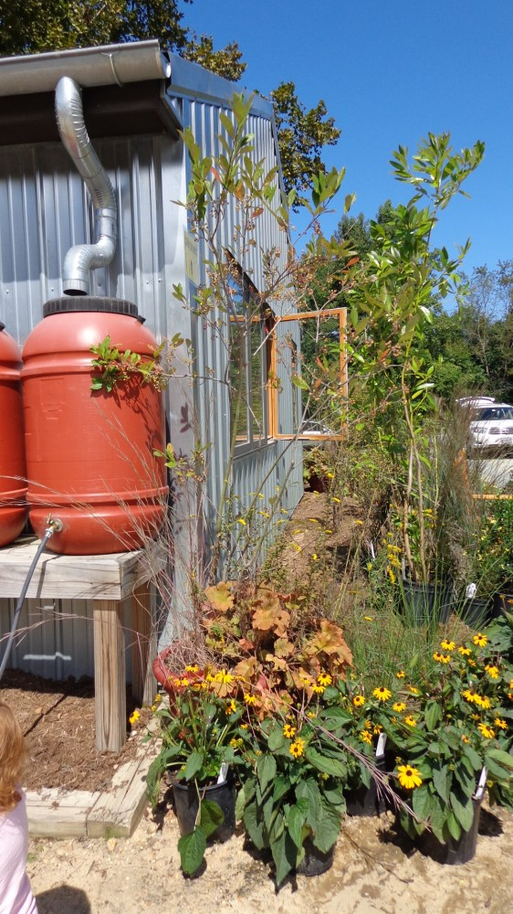 Adkins Arboretum from Shalavee.com