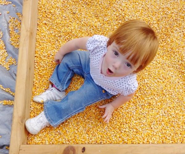 Cornbox play at the Outstanding Dreams Farm on Shalavee.com