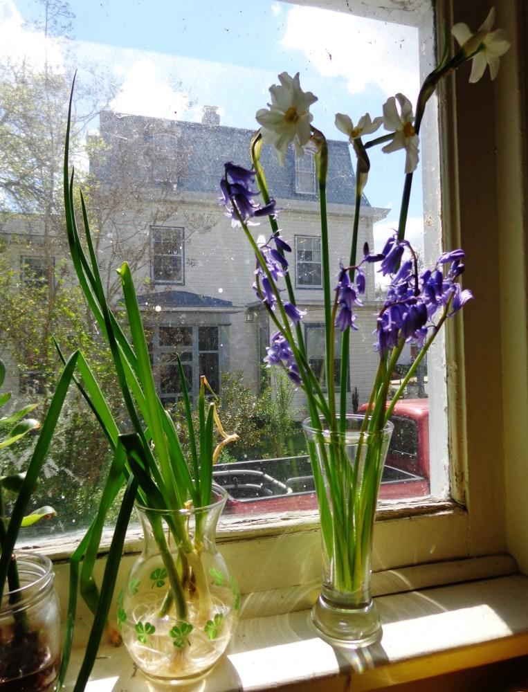 flowers on the windowsill on Shalavee.com