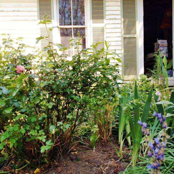 Weeding My Garden