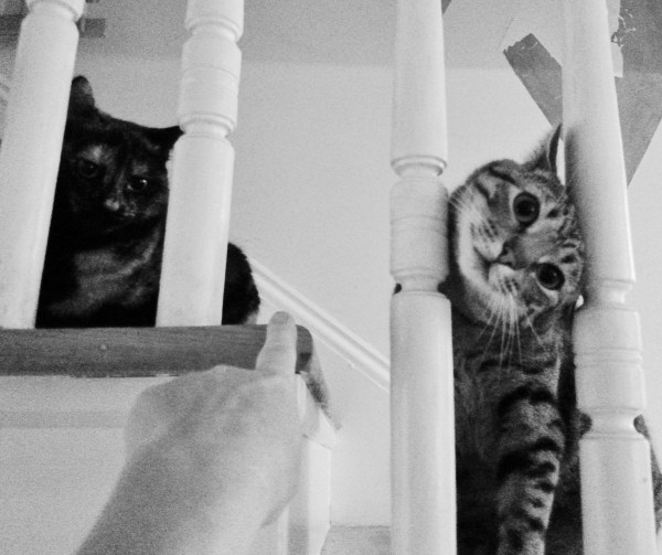 Chessie and Crackers on the stairs on Shalavee.com