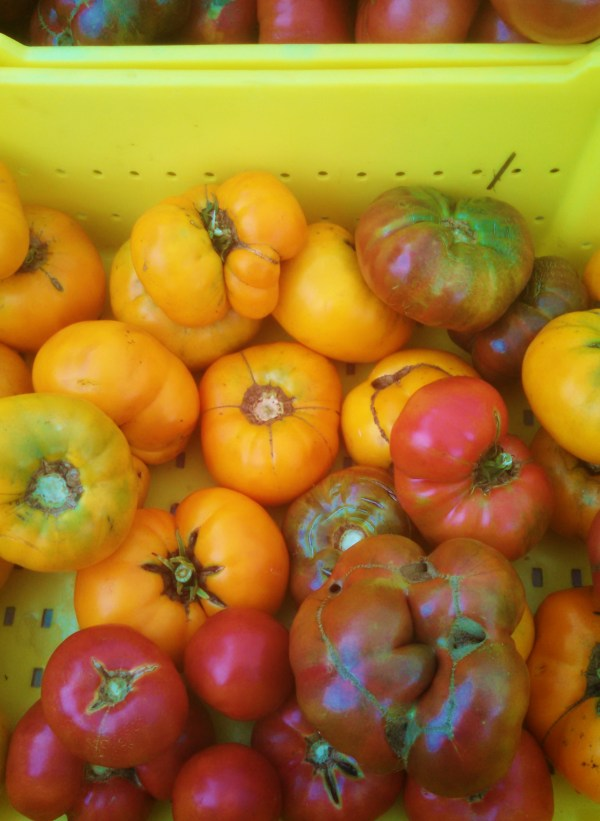 Farmers market tomatoes on Shalavee.com