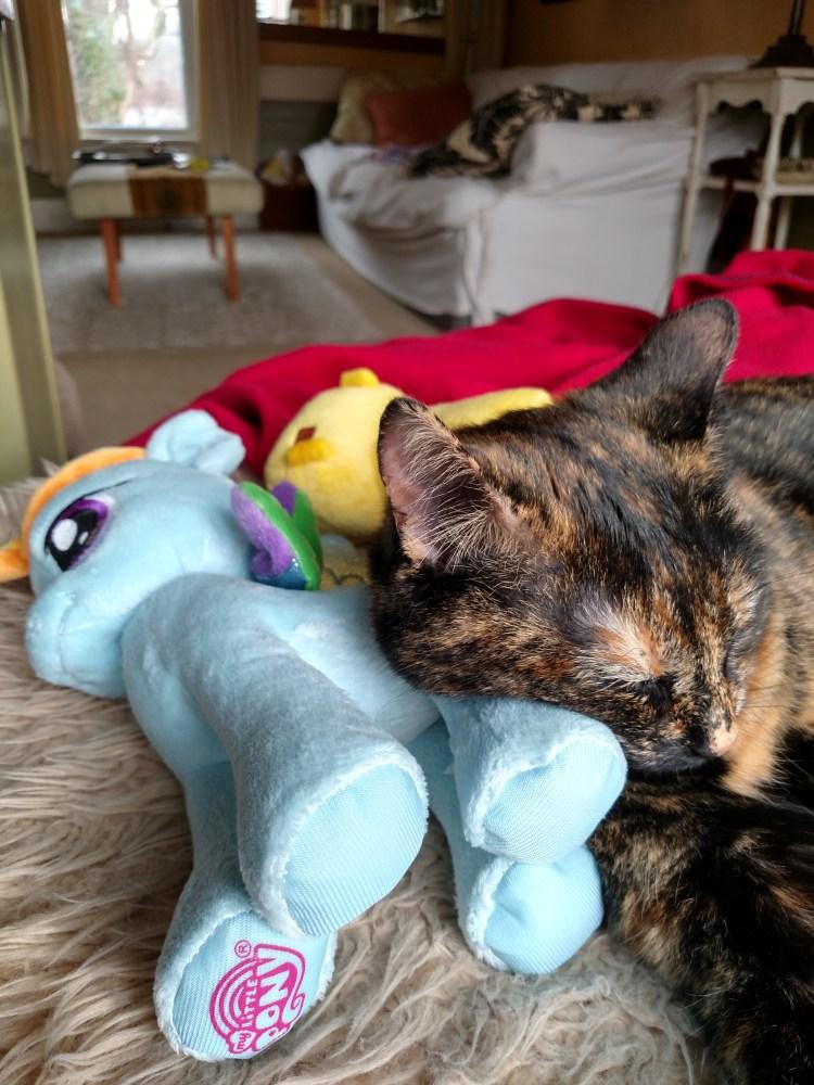 Chessie napping on Shalavee.com