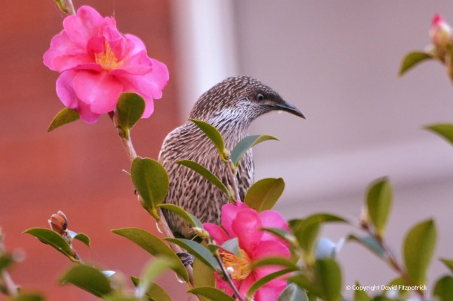Bird On A Flower
