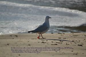 Seagull Identity Quote