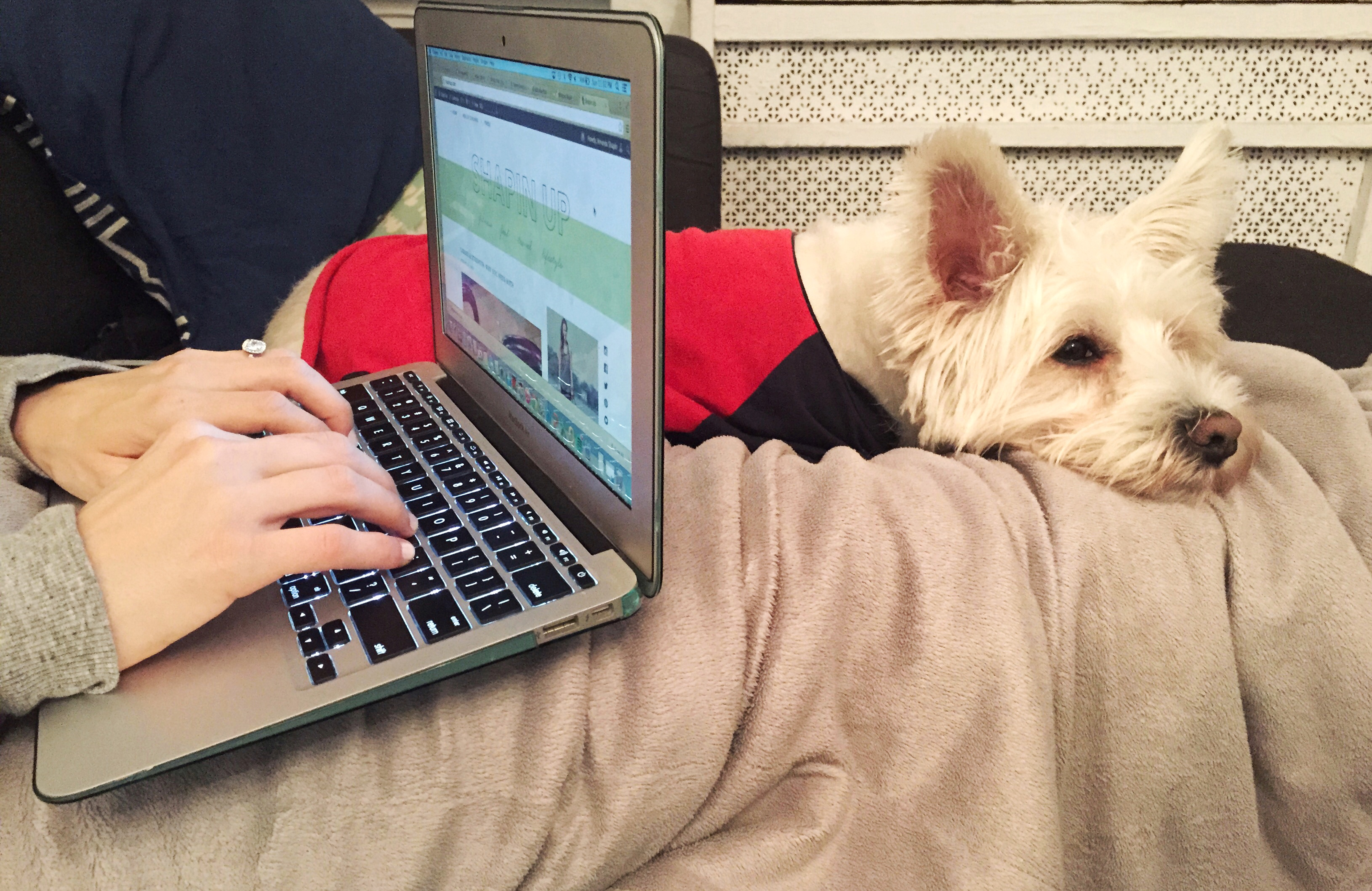 blogging with ollie