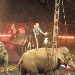 Animals in Entertainment: The Circus