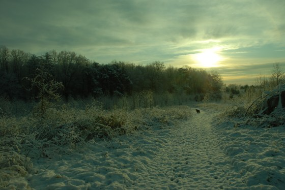 Sparky in the snow covered field at sunrise