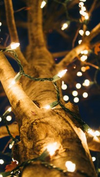 Lit-Up Tree Trunk