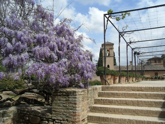 Jasmine Trees with Spanish Tower