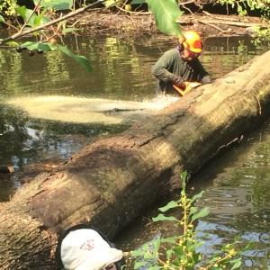 SRWA Tewksbury tree removal 8/26/17