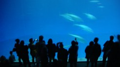 """The Monterey Bay Aquarium's """"Outer Bay"""" tank is huge!"""