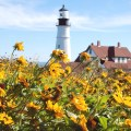 Lighthouse with sunflowers photo