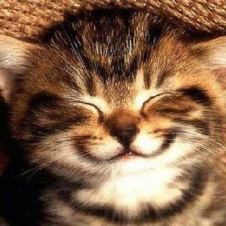 funny cat4
