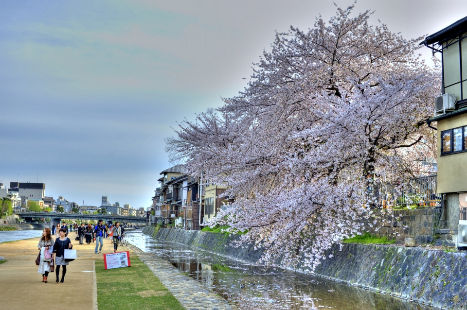 A touch of HDR with the Sakura on the riverbanks