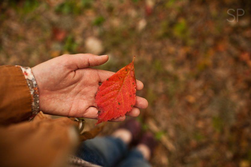 Fall Leaves!