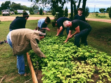 Picking the green bean harvets!