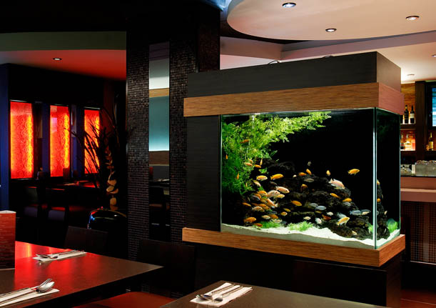 Aquariums Ponds & Water Features Freshwater Aquariums Fish & Livestock