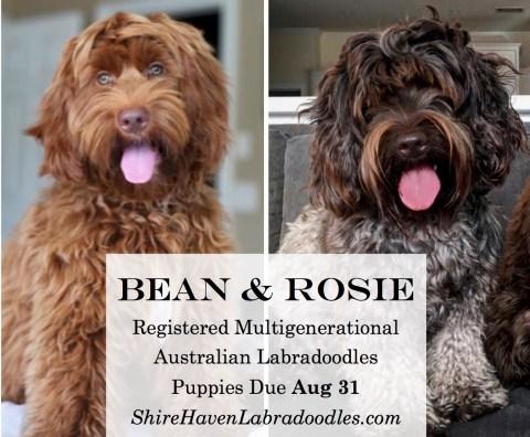 Bean&Rosie1