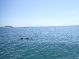 Dolphins of Shoal Bay