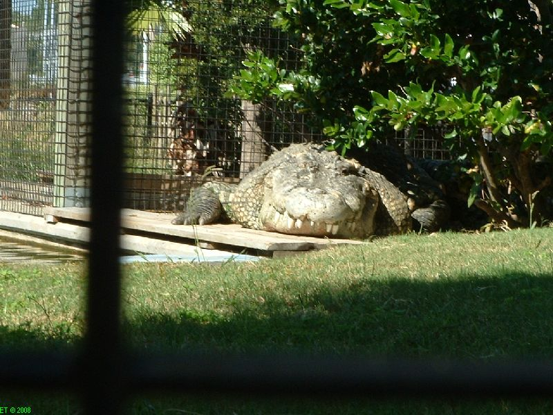 Utan King of Crocs (Myrtle Beach family attractions and fun things to do)  Shout About South