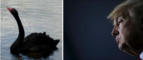 trump-black-swan