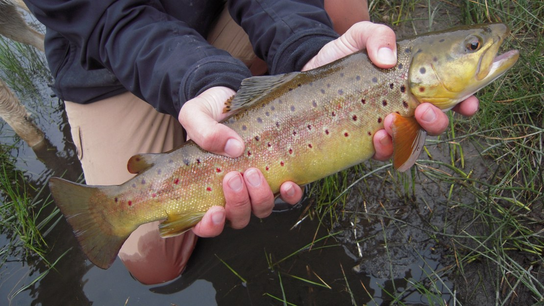 Hot Creek Fly Fishing