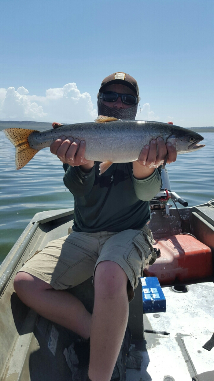 Crowley lake fly fishing report mammoth lakes ca 7 6 for Mammoth lakes fishing report