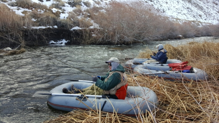 Lower owens river fly fishing report bishop ca 2 for Owens river fishing report