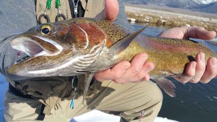 Fly fishing guide, fly fishing Bishop, Mammoth Lakes Fly Fishing