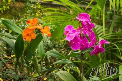 Лоро-парк: розовая и оранжевая орхидея