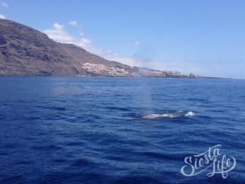 Flipper Uno: кит в океане