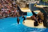 Лоро-парк — морские котики выполняют трюки