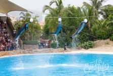Лоро-парк: дельфины выполняют трюки