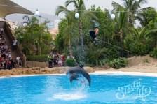 Лоро-парк: дельфины выпрыгивают из воды