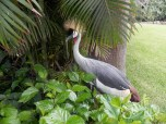 Лоро-парк: птица-секретарь