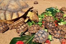 обед черепах в Лоро-парке