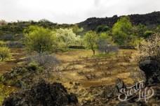 Заброшенные сады в горах на Тенерифе