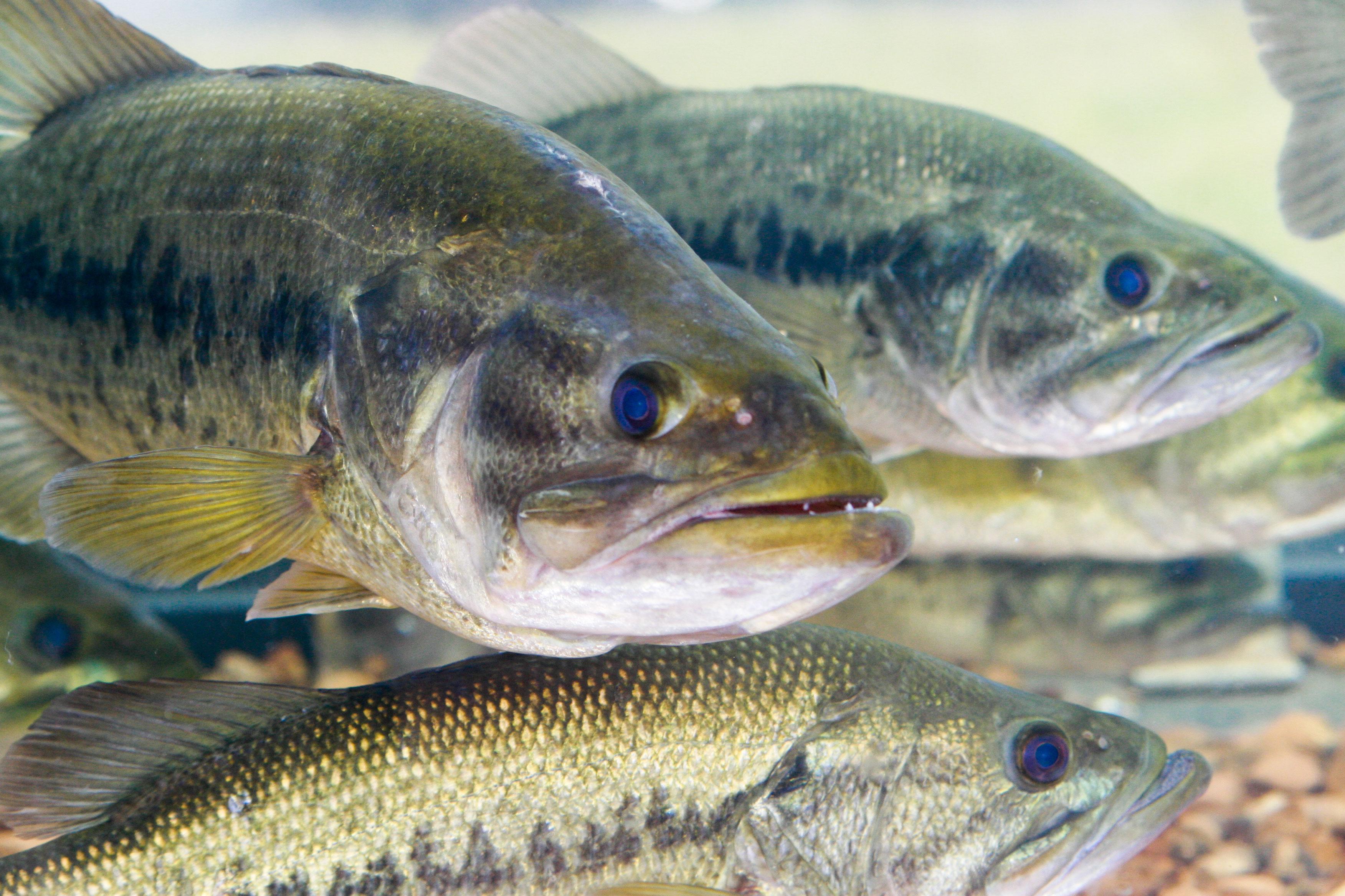 Large outdoor fish tank