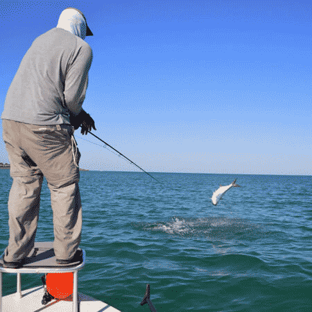 client-with-jumping-tarpon