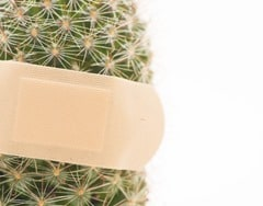 Cactus treated with a bandaid