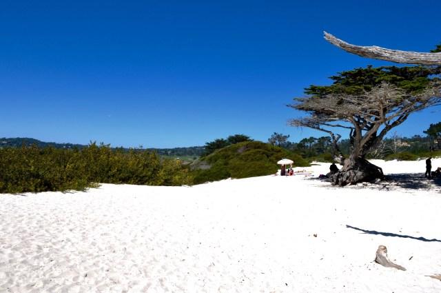 Carmel Beach City Park | Simple Sojourns