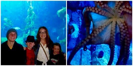 Monterey Bay Aquarium - Simple Sojourns
