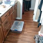 M Closet cleanup puke (3)