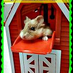 Hamster High Jinks