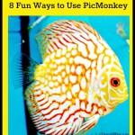 4 Fun Ways to Use PicMonkey