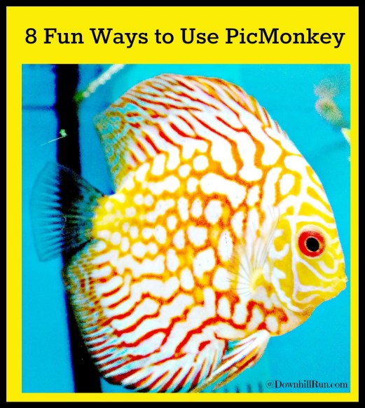 8 Fun Ways to Use PicMonkey