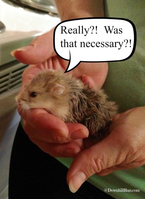 Bathtime hamster2