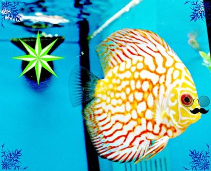 overlay fish